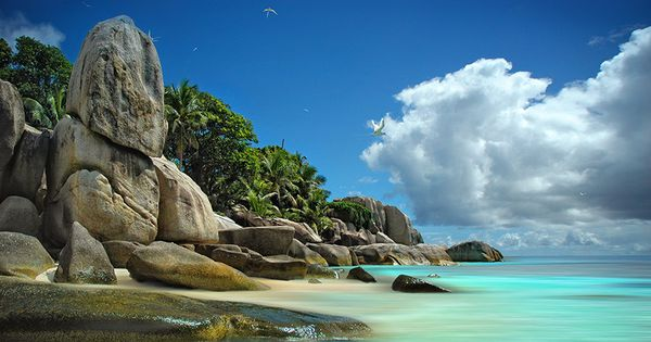 ♥Paradise Bird♥ in Coco Island by Mathilde Guillemot, via 500px. This is
