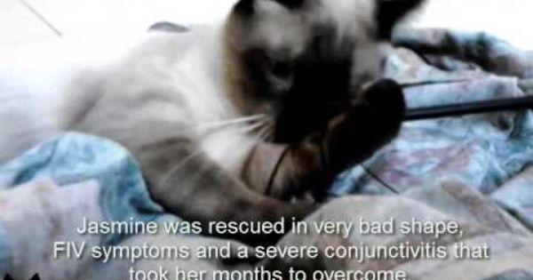 Lovecats World Lovecatsworld On Twitter Cat Adoption Rescue Team Rescue