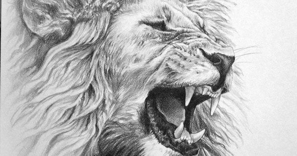 lion pencil drawing - Google Search | Captain Donna's ...