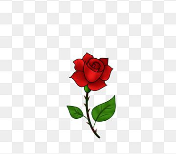 A Thorny Red Rose Roses Clipart Bunga Alam Png And Vector With Transparent Background For Free Download Red Roses Background Floral Watercolor Flower Backgrounds