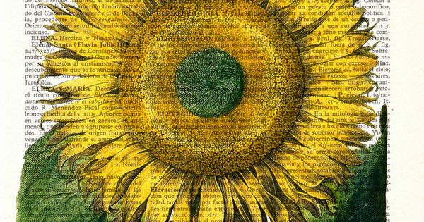 Vintage Book Print Dictionary or Encyclopedia Page Print- Book print Sunflower Botanical