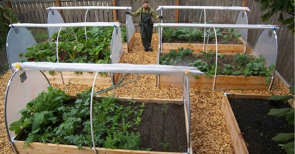 Raised Beds With Rollup Covers Gardening Backyard Vegetables Pinterest Gardens Raised