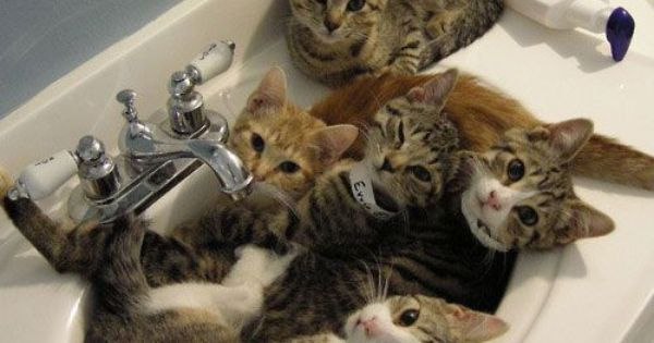 cats in a sink
