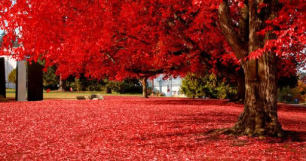 Brilliant Red. Olympia, Washington State!