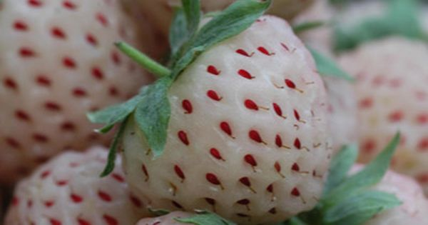 Pineberries and cream? The new summer fruit which looks like a white