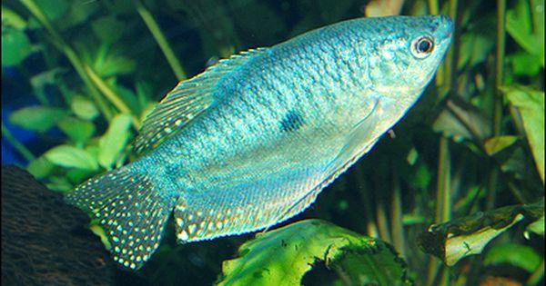 Pin On Here Fishy Fishy