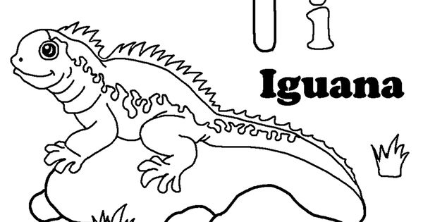 Free Printable Iguana Coloring Pages For Kids Coloring Pages For Kids Coloring Pages Coloring Books