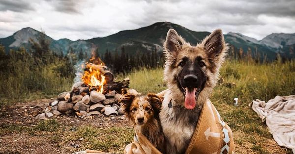Posted Withrepost When You Have The Bestest Friend And The Bestest Vibes I Absolutely Love With Images Shiloh Shepherd Shiloh Shepherd Dog Shepherd Dog Breeds