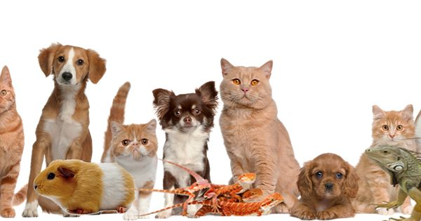 Row Of Pets Png 1920x368 Default Png 1920 368 Group Of Cats Pet Clinic Pet Relocation