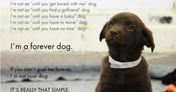 "SAME GOES FOR CATS & ALL PETS - ""I'm a forever dog"
