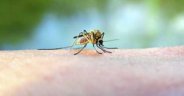 stop aux piq res de moustiques rem des de grand m re astuces pour le quotidien pinterest. Black Bedroom Furniture Sets. Home Design Ideas