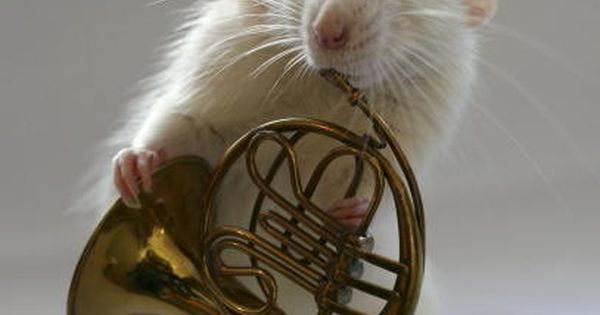 French Horn MOUSE, very talented..I need him to come and play for