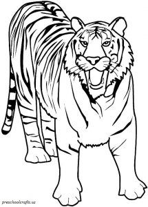 Tiger Coloring Pages For Kids Preschool And Kindergarten Tiger