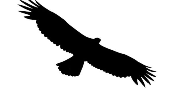 18+ Soaring eagle clipart black and white ideas in 2021