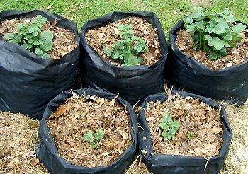 Diy Fabric Pots For Plants Can Be Made As Large In Diameter As Can Easily Be Handled And The Landscape Fabric Can Be With Images Grow Bags Edible Garden