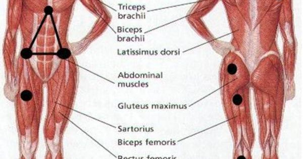 Fibromyalgia Is Frequently Characterized By Tender Points
