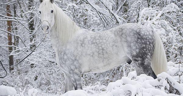 My Winter Wonderland!