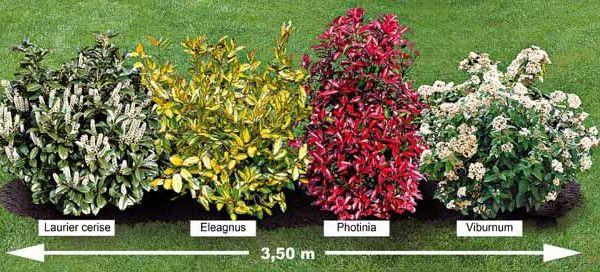 Grimpant persistant croissance rapide recherche google jardin pinterest croissance - Haie persistant croissance rapide ...