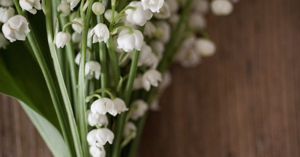 lily -of-the-valley. Reminds me of my papa and my childhood. I must