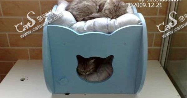 duplex cat house kitty galore pinterest cat houses. Black Bedroom Furniture Sets. Home Design Ideas