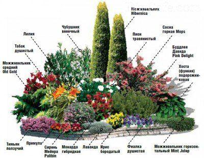 Клумба с цветами и хвойниками