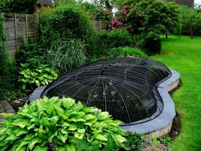 Pond covers for heron proofing predator proofing pond for Koi pond cover