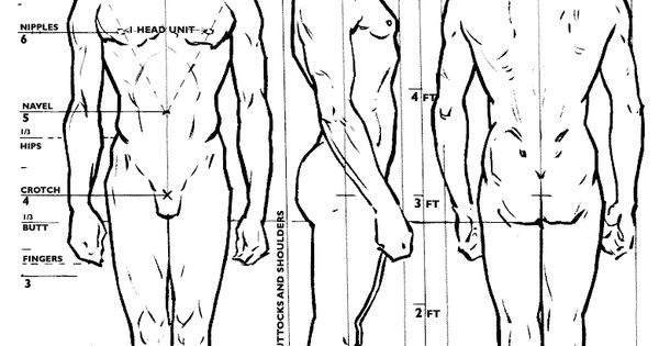Character Design Proportions : Human proportions ★ character design references™ https