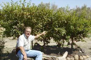 Dave Wilson Nursery Fruit Tree Pruning