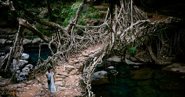 Deep in the rainforests of the Indian state of Meghalaya, bridges are