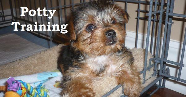 how to potty train a staffy puppy