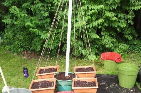bean trellis idea