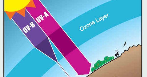 ozone essays