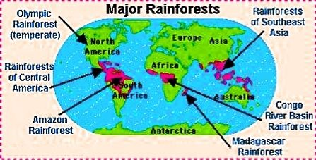 Rainforest Map Of Tropical And Temperate Rain Forests Shows How