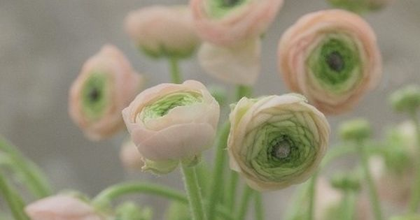 pale pink flowers with green... I'm thinking pale pink and sage green