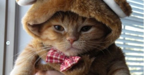 Teddy Bear Kitty Cat Costume