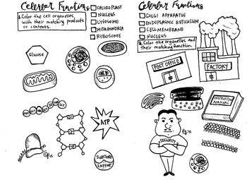 Cell Organelles Coloring Sheet Cell Organelles Organelles Cell Parts