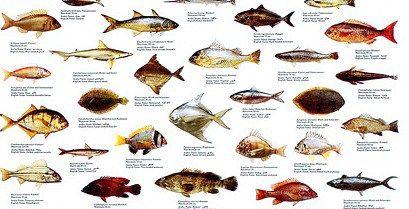 Uae Fish Species Emirates Fishing Sea Fish Deep Sea Fishing Aquarium Fish