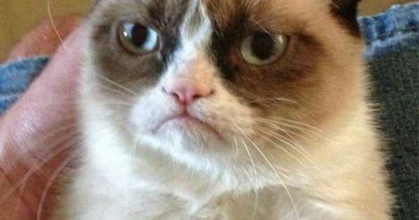 Laugh Now - Grumpy Cat Quotes GrumpyCat Memes