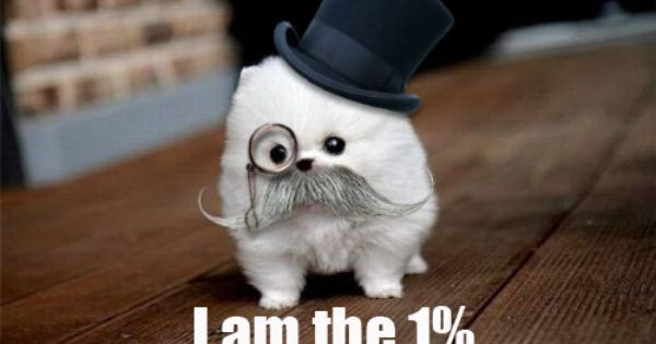 Oh, nothing. Just a teacup Pomeranian in a monocle, mustache, and top
