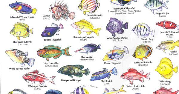 Free Download Photoshop Here Hawaiian Reef Fish Guide