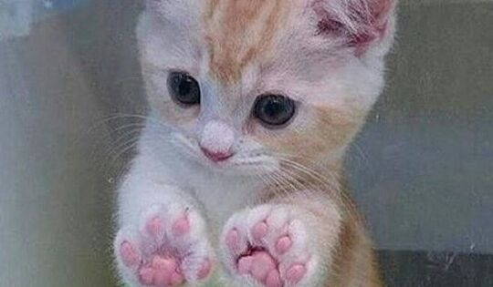 Those Little Paws Quotes