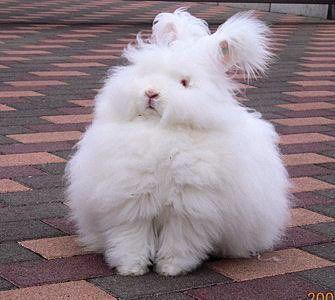 各カテゴリーに分けてまとめました※増量してカテゴリ増やして更新しました | アンゴラウサギ, かわいいウサギ, 珍しいペット