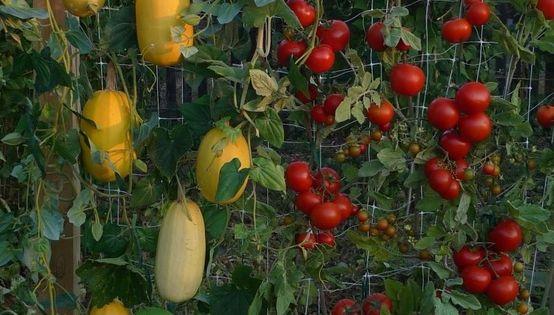 A vertical veggie garden idea.