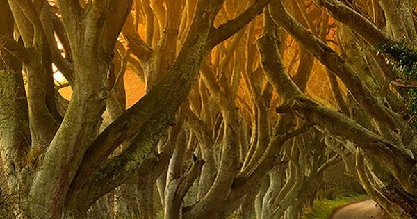 The Dark Hedges in Antrim, Ireland. I know its a photo of