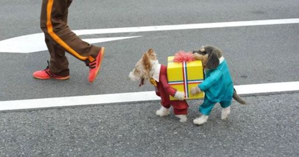Hilarious! Cute gift carrying puppy dog costume