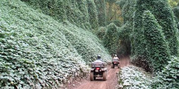 Hatfield Mccoy Atv Utv Trails Atv Trail Riding Trails Heaven Trail Riding Atv Riding American Road Trip