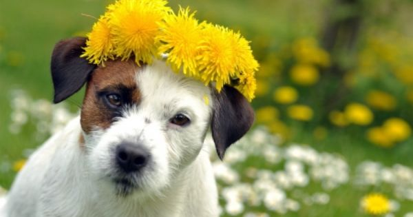 Dog Puppy Spring Dog In Spring Google Search Funny Dog