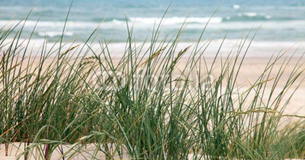 fototapete danemark strand in norddanemark tapeten shop leinwand groß günstig poster kaufen