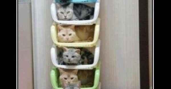 How to Store and Organize Cats: Tower of Cats