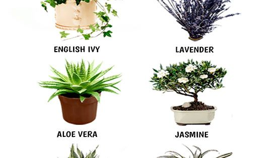 Beste Slaapkamer Plant : Houseplant, Sleep and Plants on Pinterest